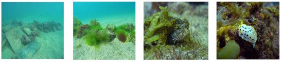 eco魚礁づくり